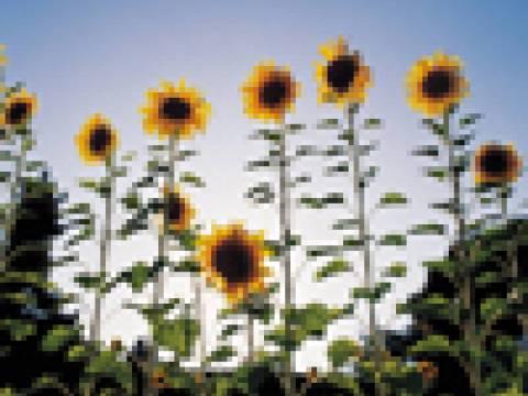 Vialii Garden Services2