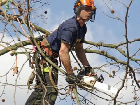 Herts Tree Care4
