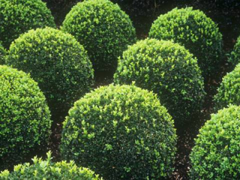Herts Tree Care3