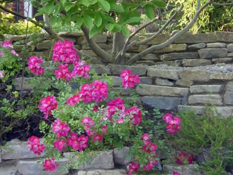Iqon Gardening Services1