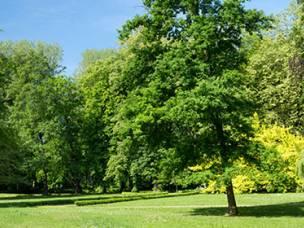 Oaklands Tree Specialists Ltd. in Hertfordshire