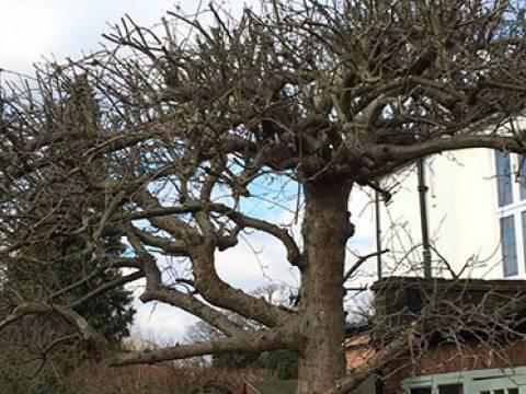 Oaklands Tree Specialists Ltd.2