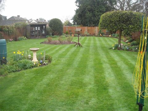 Lawn Master1