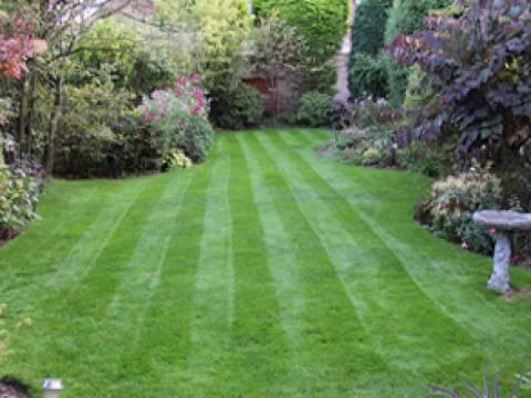Lawn Master2