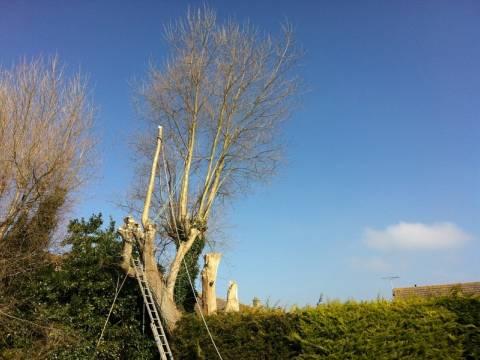 Richard Payne Tree Surgery3