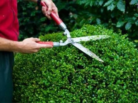 D.J. Garden Services 1