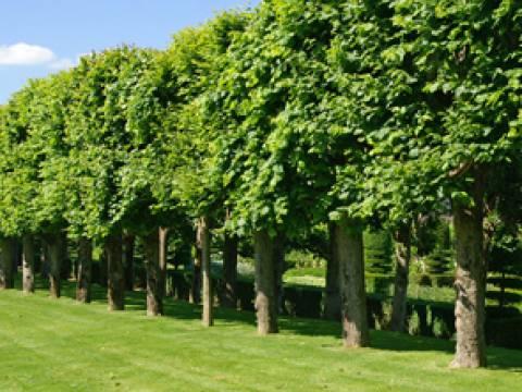 Tree, Hedge & Garden Services3