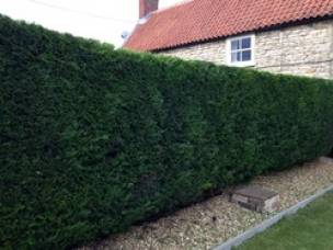 Sarah Mitchell  Tree & Garden Services Ltd in Lincolnshire