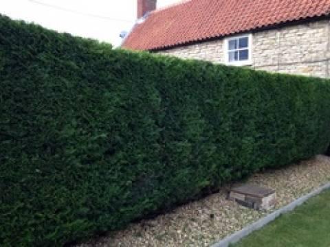 Sarah Mitchell  Tree & Garden Services Ltd1