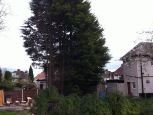 Rapid Tree Care Liverpool  in Merseyside