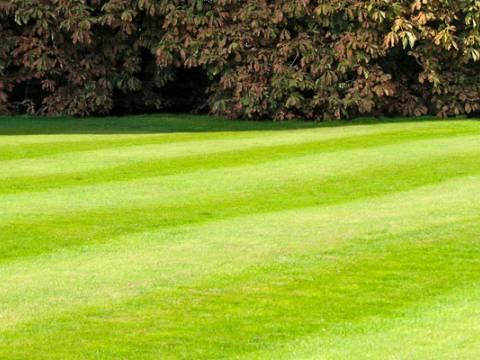 Ripon Gardening Services 1