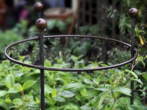 Wild Garden Design5