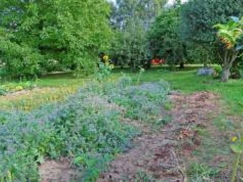 Jay's Garden Maintenance 2
