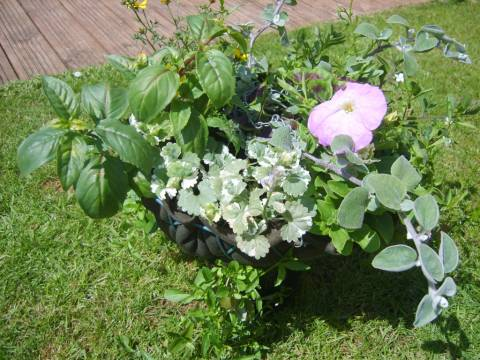 J&K Primrose Garden Maintenance 2