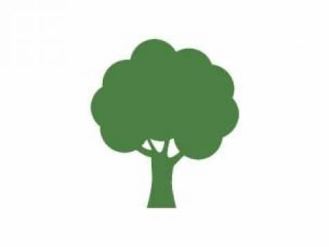 KP tree care1