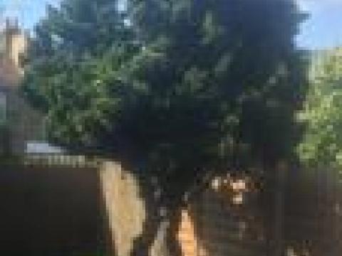 Cypress garden services 3