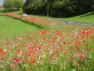 Hertfordshire Garden Landscapes in Hertfordshire