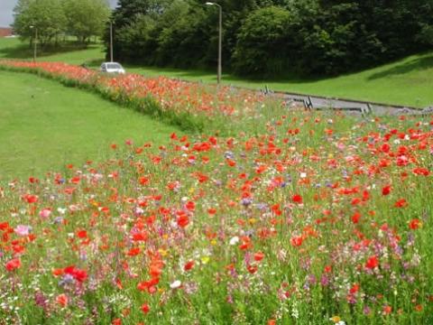 Hertfordshire Garden Landscapes1