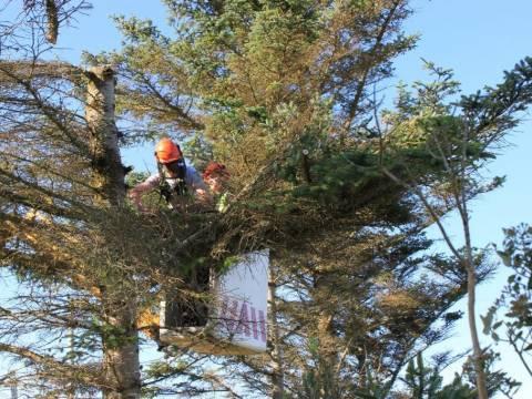 LTC Tree Surgery 1