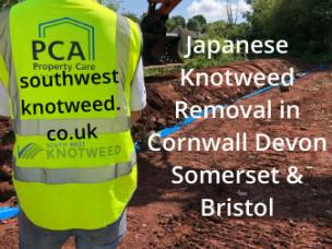 Southwest Japanese Knotweed Removal Cornwall Devon Bristol Somerset in Cornwall