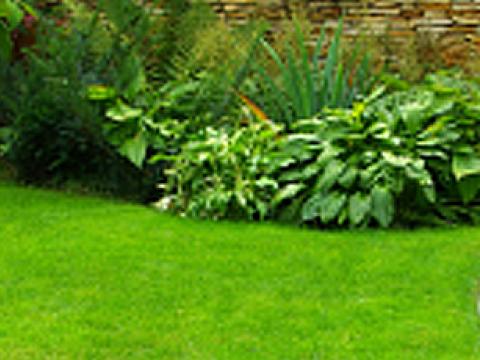 Eden gardens 5