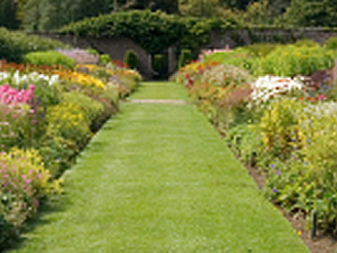Eden gardens 3