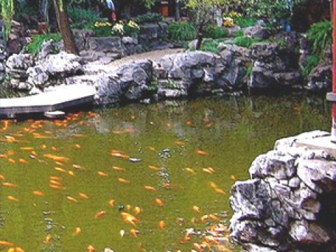 Moota garden centre 2