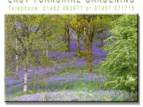 East Yorkshire Gardening1