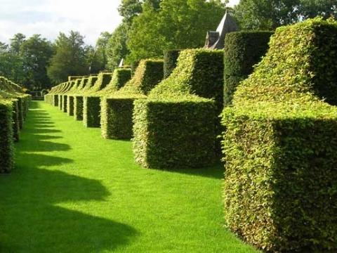 Essex Garden Care1