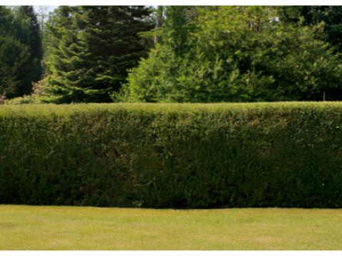 Greenfields Garden Services Ltd1